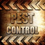 Pest control background
