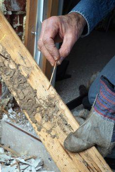 Southeast Houston Home's termite damage.