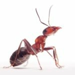 Ant Pest Control Services in Houston Texas