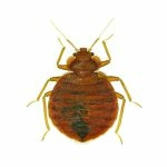 Bed Bug Extermination & Prevention In Houston