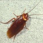 Cockroach Extermination & Prevention In Houston
