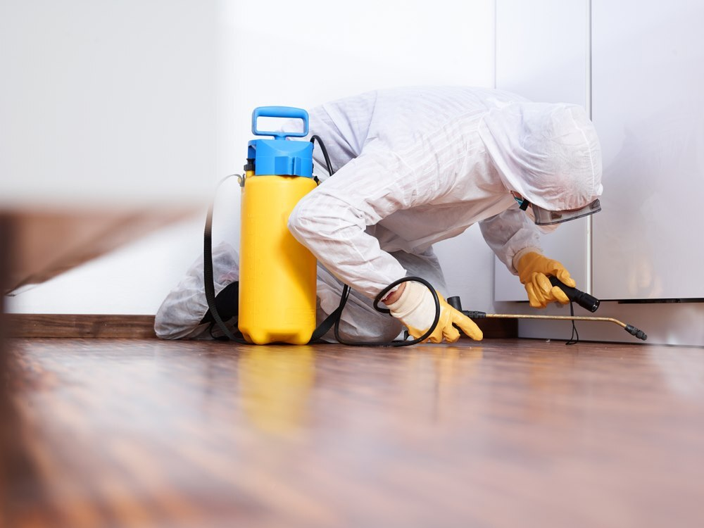 Cypress Pest Control Services