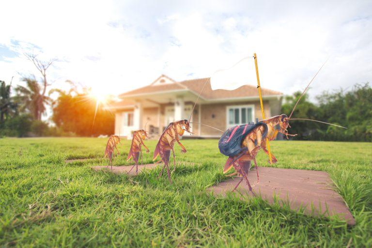 Flea Pest Control in Houston