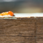 Termite Pest Control in Houston TX