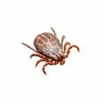 Tick Extermination & Prevention In Houston TX
